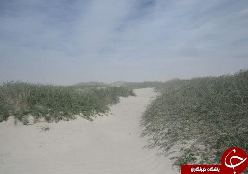 مهار ریزگردهای نمکی در حوضه آبریز دریاچه ارومیه/نگین فیروزهای آذربایجان نفسی تازه میکند