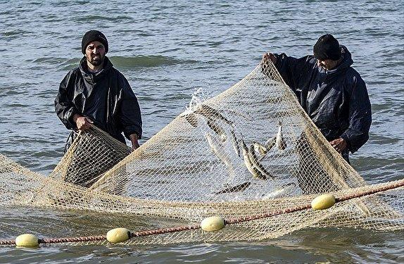 صید بیش از ۳۰۰ ماهی استخوانی