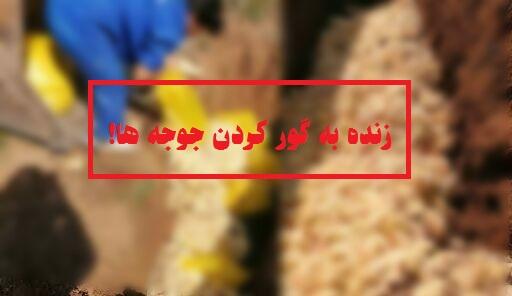 وضعیت هشدار برای مرغ مادرها/ زنده به گور کردن جوجه ها راهی برای کاهش تولید/ آیا زنده به گور کردن جوجه ها راهکار درستی برای کاهش تولید است؟/ موانع صادرات کار را به معدوم سازی جوجه های یکروزه رساند/ کمبود دان، تقاضا برای خرید جوجه را کاهش داد