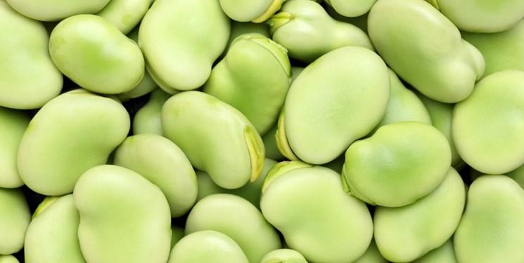 باقلا میتواند جایگزینی سبز برای سویا باشد