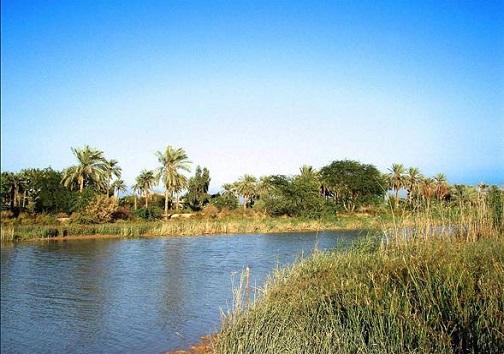 جزیره مینو ، پوشیده  از  نخلستان و نیزارهای انبوه