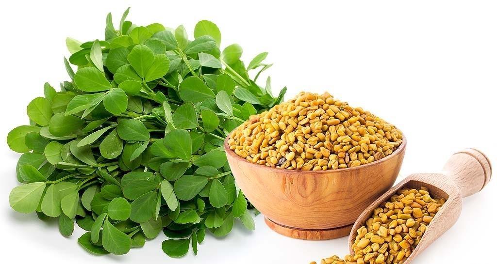 ۵ گیاه دارویی مفید برای دیابتیها