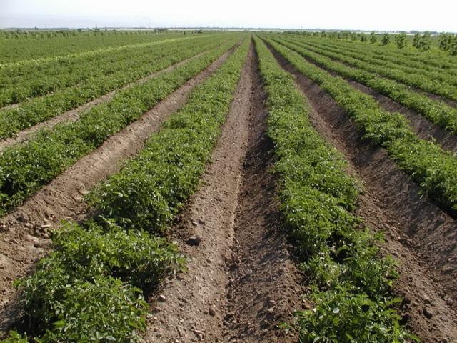 اجرای الگوی کشت تنها نسخه شفابخش کشاورزی کشور