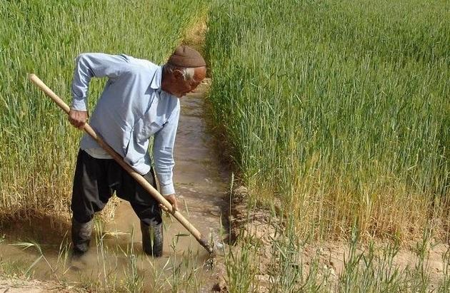 توصیه های هواشناسی کشاورزی به کشاورزان یزدی