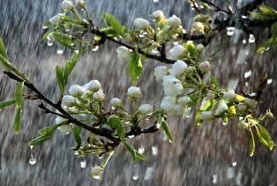 بارش بهاری در انتظار زنجانیها