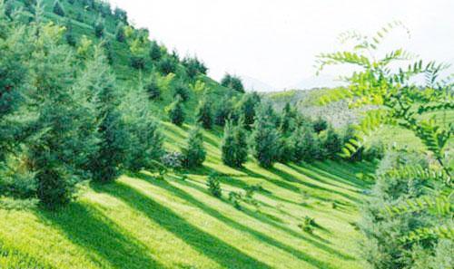 توسعه ۳ برابری جنگل کاری در کبودراهنگ