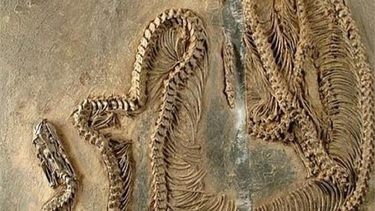 فسیل ۴۷ میلیون ساله یک مار