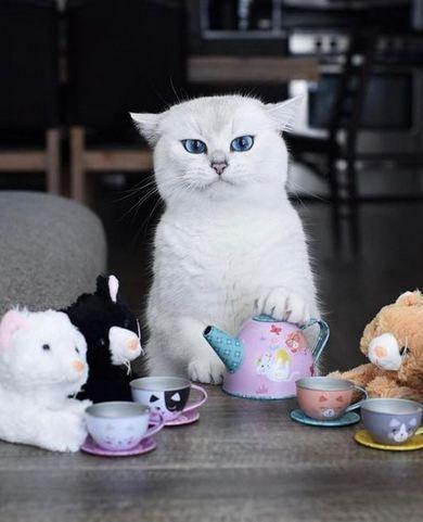 تصاویری از گربه محبوب اینستاگرامی