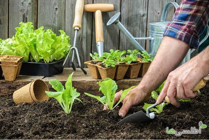 بذر سبزیجات از کجا بخریم؟