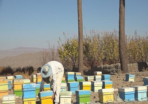 سالی که نکوست از بهارش پیداست/سالی پربار برای زنبورداران خراسان جنوبی
