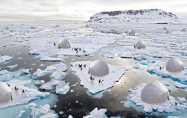 ابداع خلاقانه طراح ایرانی برای حفاظت از پنگوئن ها