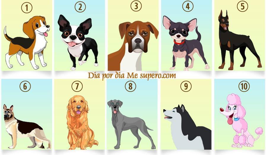 تست روانشناسی جالب با نژاد سگ
