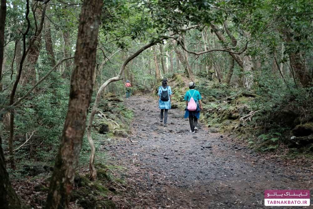 حقایق باورنکردنی از جنگل خودکشی در ژاپن