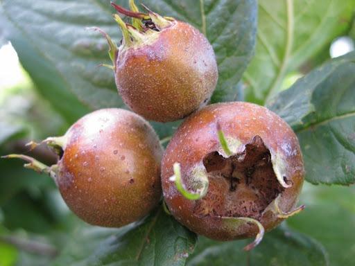 میوهای جادویی برای مقابله با کم خونی و آلزایمر