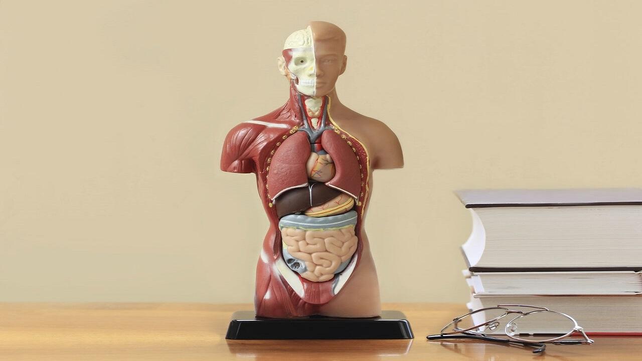 13253481 358 » مجله اینترنتی کوشا » عجیبترین موارد پزشکی در سال ۲۰۲۰ 1