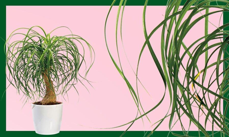 ۱۰ گیاهی که فضای خانه را شاداب میکند