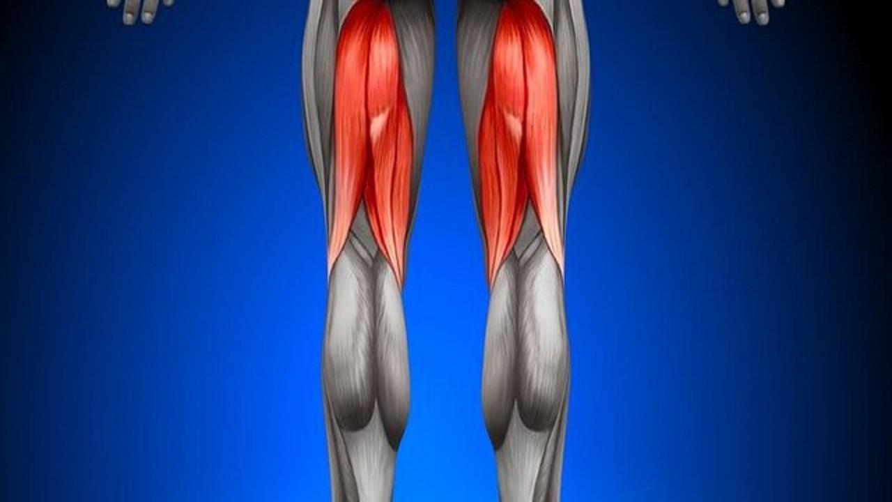 عضلات،عضله،همسترينگ،پارگي،درمان،آسيب،فعاليت،گروه،لگن،ران،زان ...