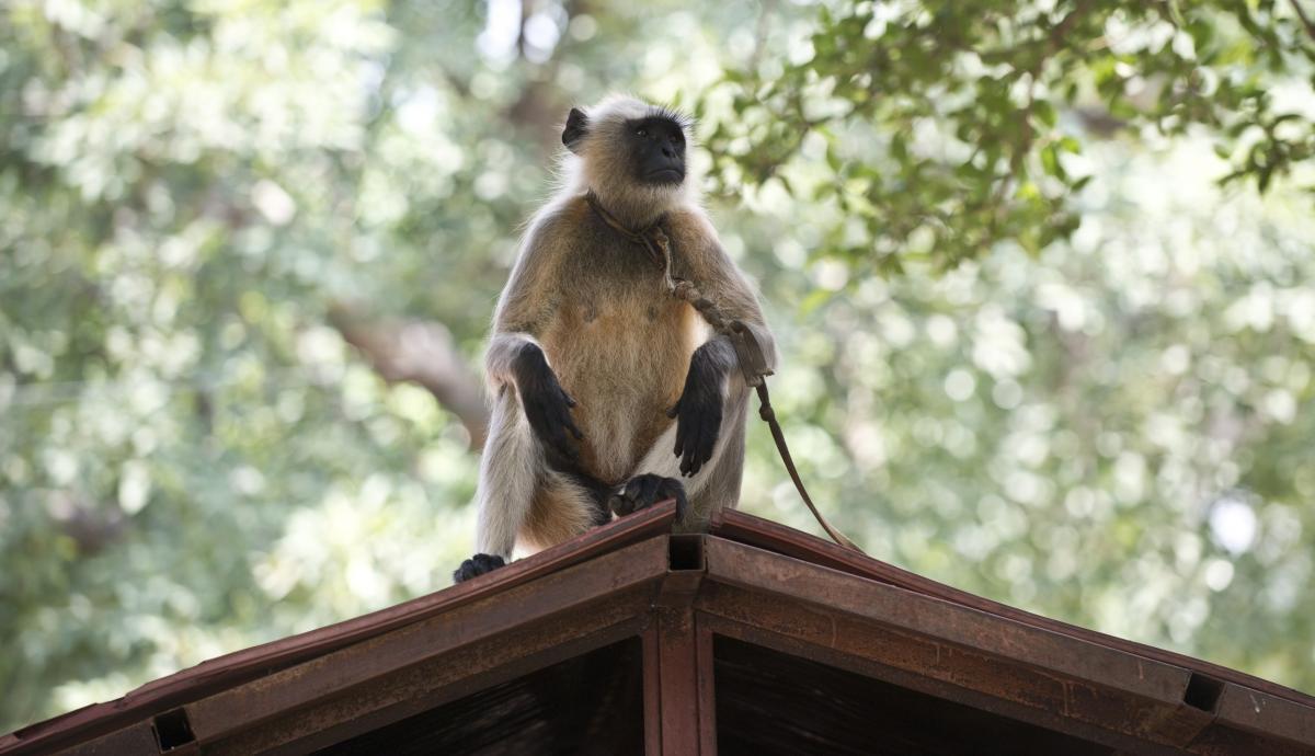 حمله مرگبار میمون به نوزاد به خیر گذشت