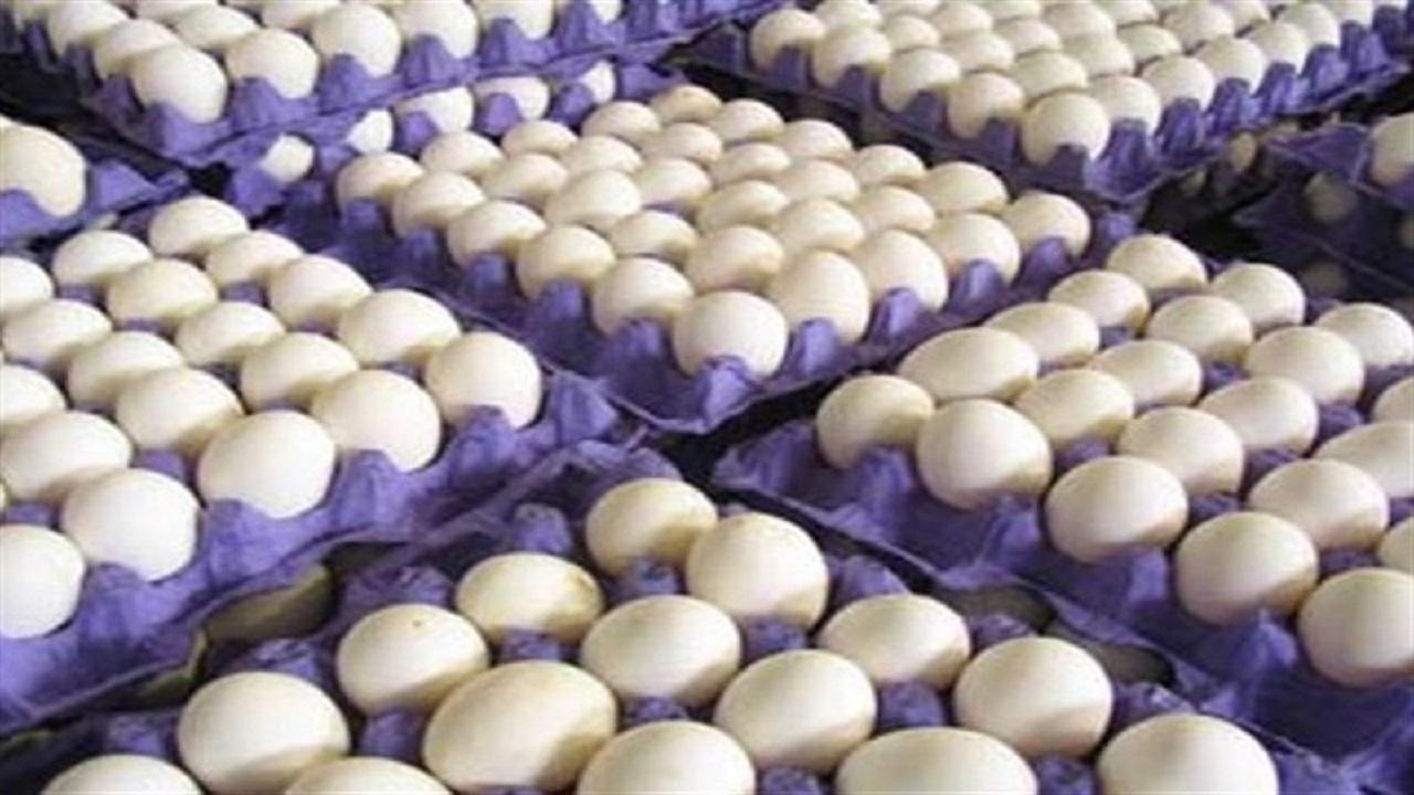 توزیع تخم مرغ در قم بر مدار نرخ مصوب