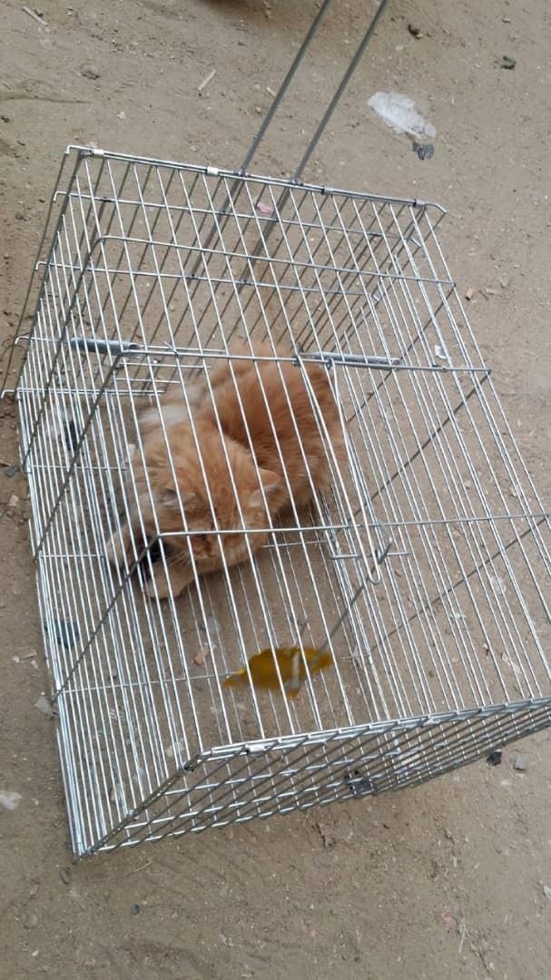 خشم دوستداران حیوانات از ایده به دام انداختن گربهها + تصاویر