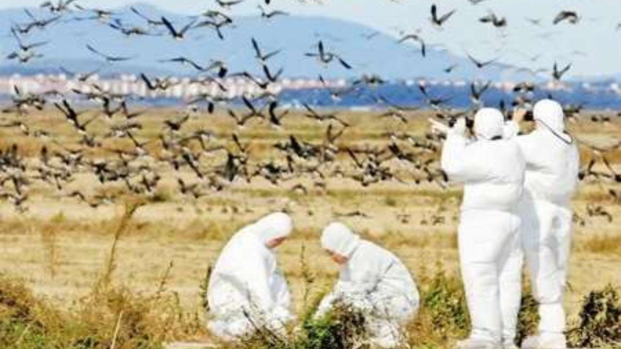 موردی از آنفلوآنزای فوق حاد پرندگان در استان همدان مشاهده نشده است