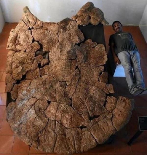 کشف اسکلت بزرگترین لاک پشت در زمین