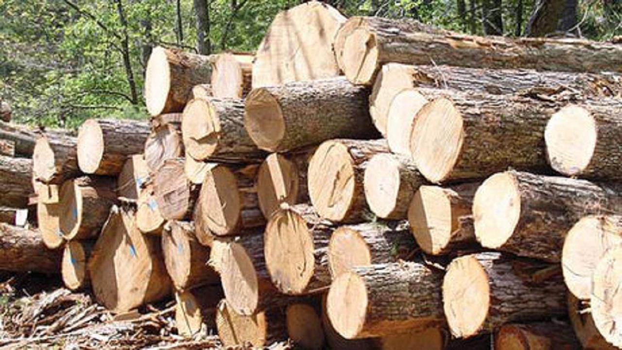 کشف دپو نگهداری درختان قطع شده
