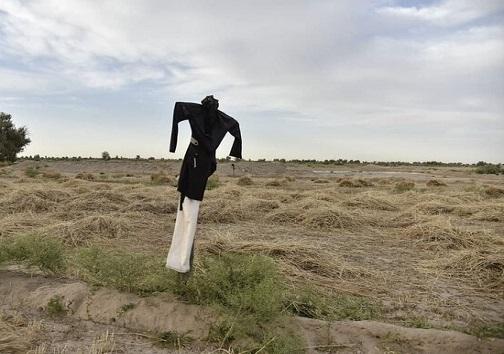 رنج بیآبی مزارع شرق اصفهان و سالها امید به زایندهرود خشک