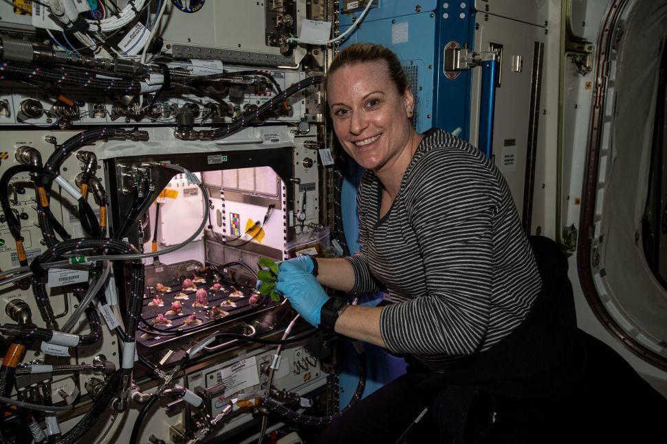 اهداف ناسا برای کاشت سبزیجات فضایی