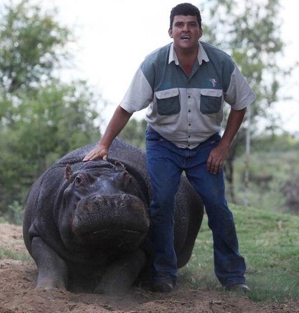 حمله مرگبار اسب آبی به کشاورزی در آفریقای جنوبی+ تصاویر