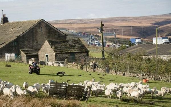 یک مزرعه جالب در کنار یکی از بزرگترین بزرگراههای انگلیس