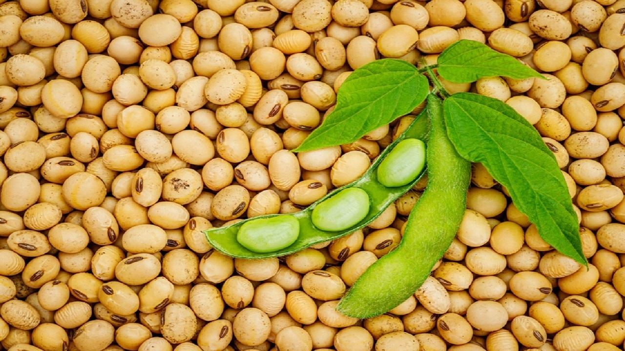 فواید شگفتانگیز پروتئین سویا