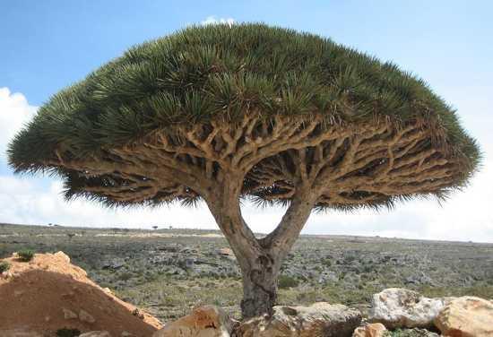 ۱۰ درخت عجیب و غریب و غیر عادی