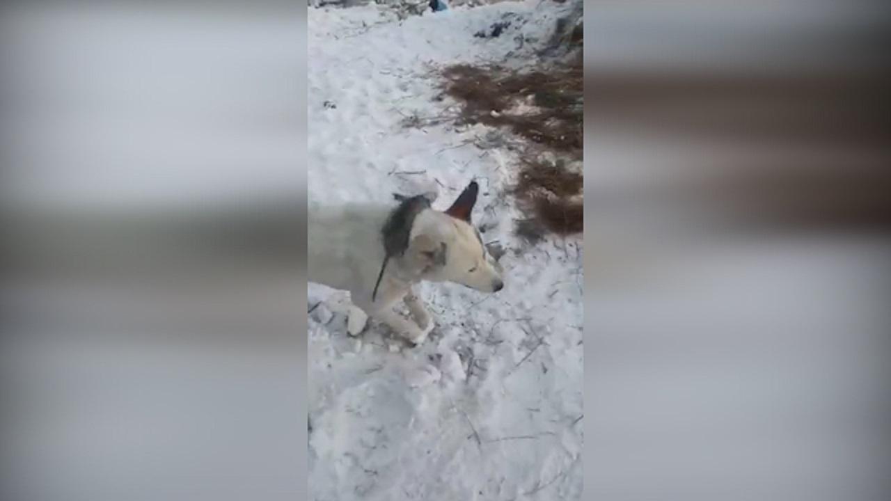 حیواناتی که ایستاده یخ زده اند! + فیلم