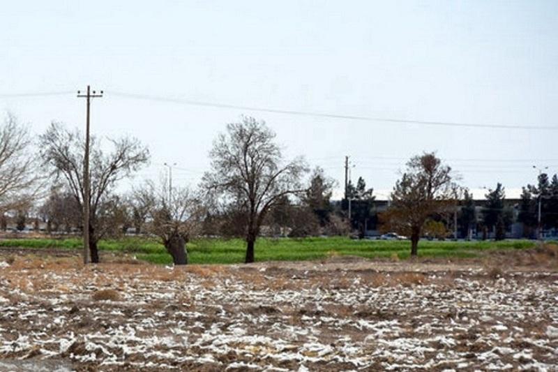 پسماندهای پلاستیکی سرگردان ناشی از کشت در زمینهای کشاورزی بلای جان طبیعت