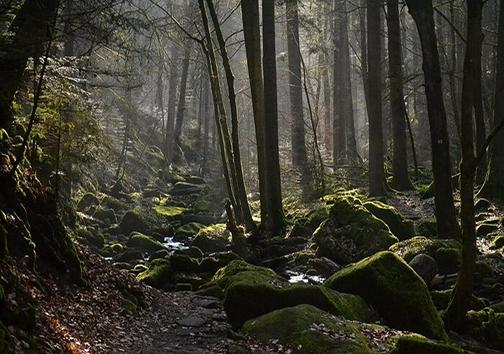 از راز جنگل جیغ چه می دانید؟!