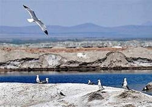 نبض تالابهای لرستان به دور از آنفلوانزای فوق حاد پرندگان مهاجر می زند