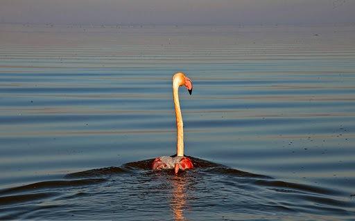سرنوشت بی رحمانه پرندگان مهاجر در تالاب میانکاله/ مبهم بودن علت مرگ پرندگان مهاجر