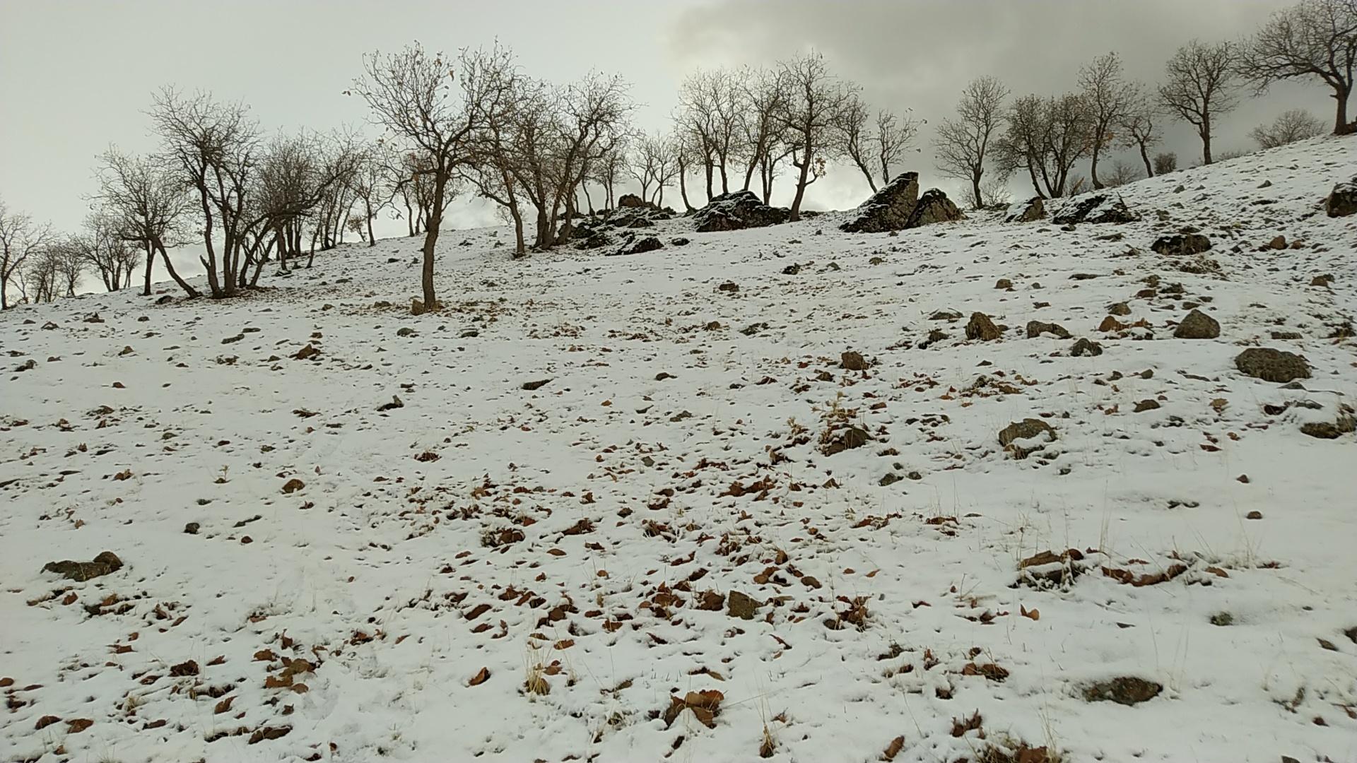 سرما و یخبندان در استان های کشور/ امداد رسانی به در راه ماندگان ادامه دارد + فیلم