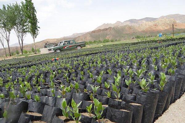 تولید ۳۸۰ هزار اصله نهال جنگلی در کهگیلویه و بویراحمد