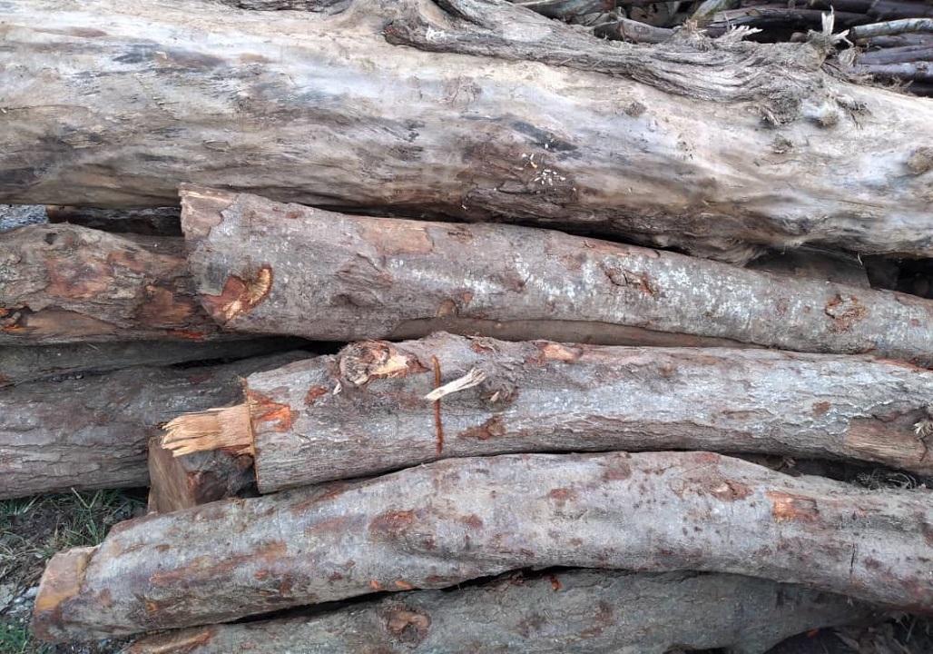 کشف ۱۳ تن چوب جنگلی قاچاق در سیاهکل