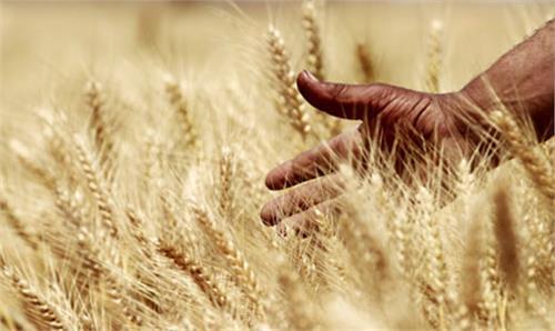 قاچاق آرد به مرزها
