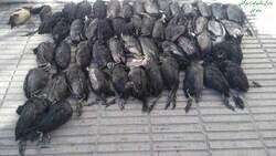 روایتی جدید از قتل عام پرندگان در خلیج گرگان
