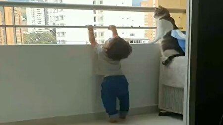 مواظبت یک گربه باهوش از کودک خردسال + فیلم