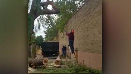 برخورد دلخراش درخت با سر یک مرد + فیلم