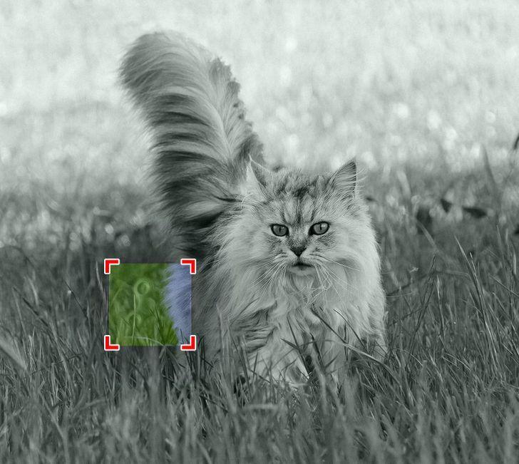 معمای تصویری؛ اجسام پنهان شده در تصاویر را پیدا کنید