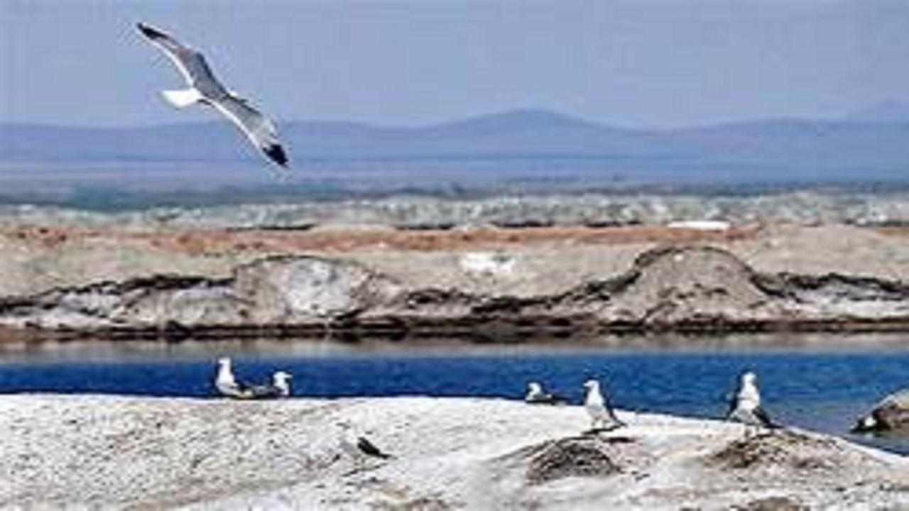 نبض تالابهای لرستان به دور از آنفولانزای فوق حاد پرندگان مهاجر می زند