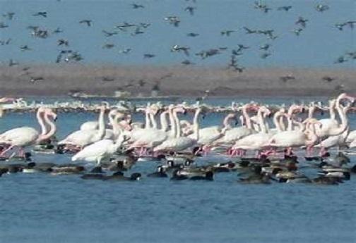 نبض آبهای روان تالابهای لرستان به دور از آنفولانزای پرندگان می زند