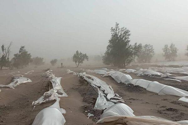 طوفان شن و سرمازدگی و آنچه بر کشاورزان جنوب سیستان و بلوچستان گذشت