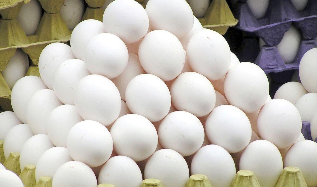 گزارش// اختلاف قیمت تخم مرغ های بسته بندی در سایه کمبود نظارت/ قیمتمنطقی هر عدد تخم مرغ ۱۲۰۰ تومان